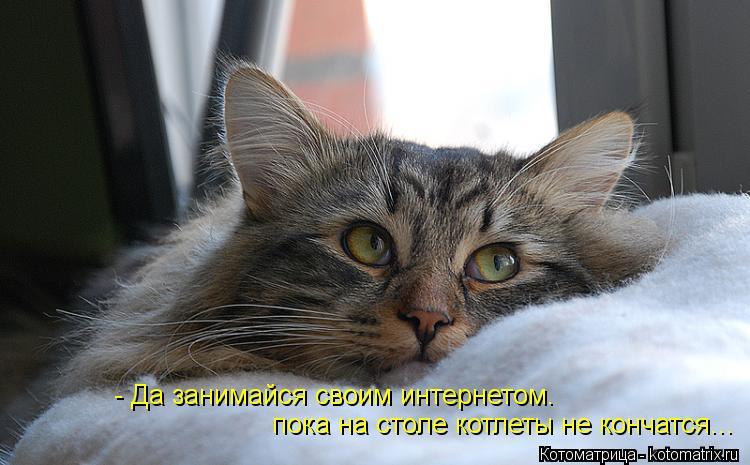 Котоматрица: - Да занимайся своим интернетом.  пока на столе котлеты не кончатся...