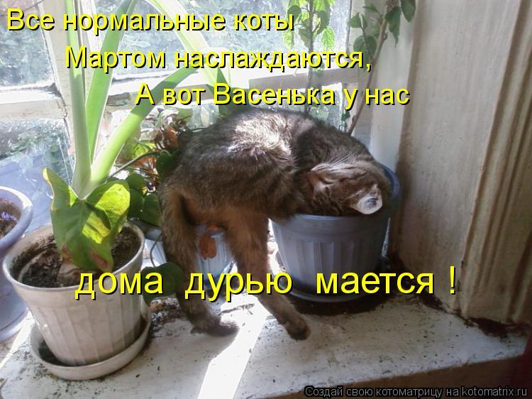 Котоматрица: Все нормальные коты Мартом наслаждаются, А вот Васенька у нас дома  дурью  мается !