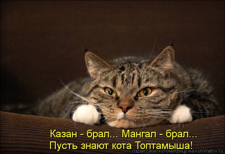 Котоматрица: Казан - брал... Мангал - брал... Пусть знают кота Топтамыша!