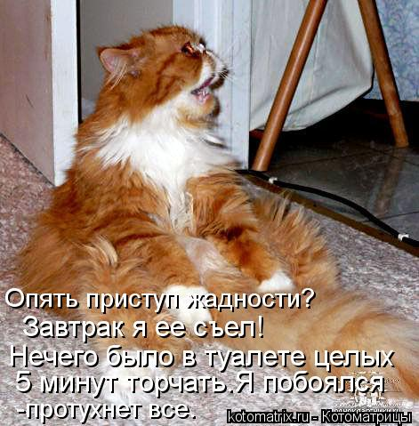 Котоматрица: Опять приступ жадности? Завтрак я ее съел! Нечего было в туалете целых  5 минут торчать.Я побоялся  -протухнет все.