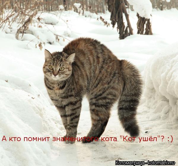 """Котоматрица: А кто помнит знаменитого кота """"Кот ушёл""""? :)"""