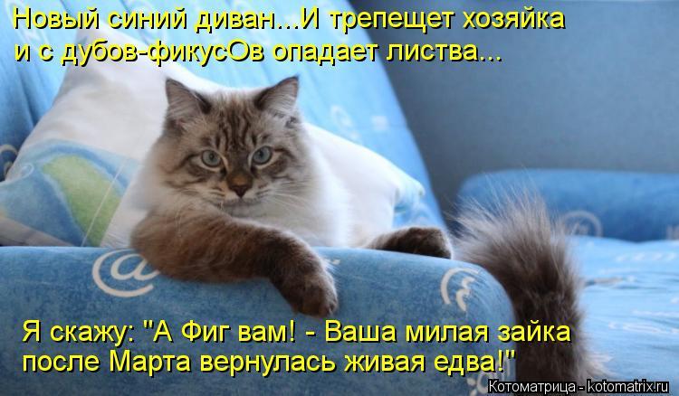 """Котоматрица: Новый синий диван...И трепещет хозяйка и с дубов-фикусОв опадает листва... Я скажу: """"А Фиг вам! - Ваша милая зайка после Марта вернулась живая е"""