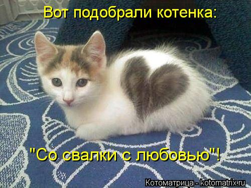 """Котоматрица: Вот подобрали котенка: """"Со свалки с любовью""""!"""