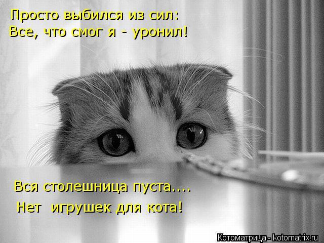 Котоматрица: Просто выбился из сил: Все, что смог я - уронил! Вся столешница пуста.... Нет  игрушек для кота!
