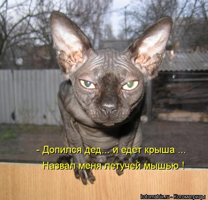 Котоматрица: - Допился дед... и едет крыша ... Назвал меня летучей мышью !