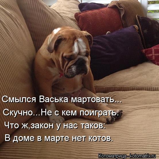 Котоматрица: Смылся Васька мартовать... Скучно...Не с кем поиграть. Что ж,закон у нас таков: В доме в марте нет котов.