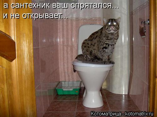 Котоматрица: а сантехник ваш спрятался...  и не открывает...