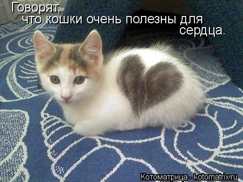 Котоматрица: Говорят, что кошки очень полезны для сердца.