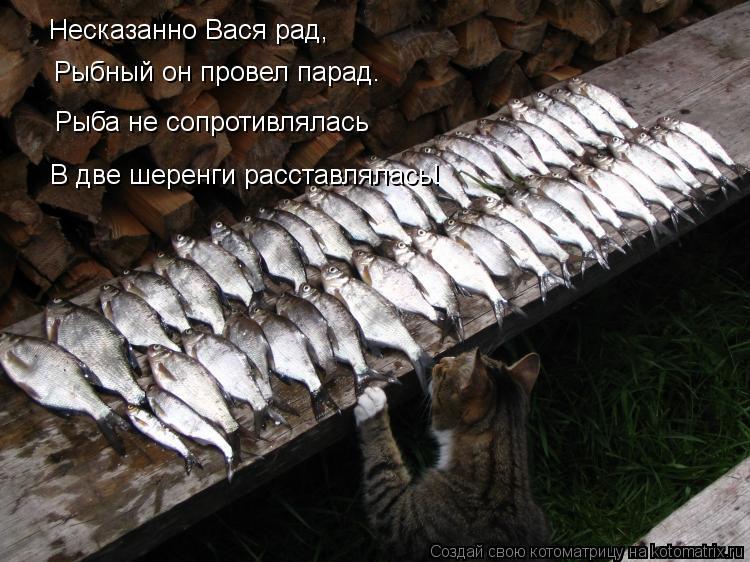 Котоматрица: Несказанно Вася рад, Рыбный он провел парад. Рыба не сопротивлялась В две шеренги расставлялась!