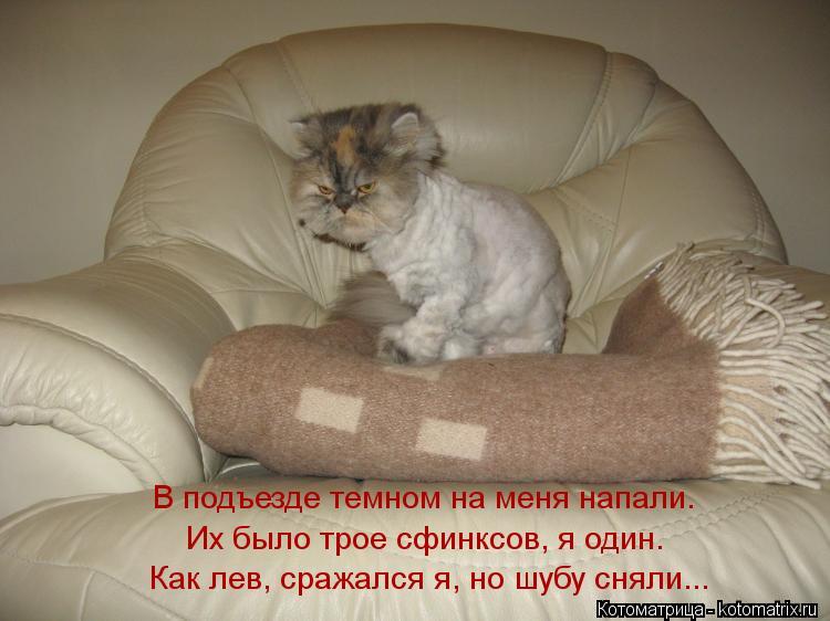 Котоматрица: Их было трое сфинксов, я один. В подъезде темном на меня напали.   Как лев, сражался я, но шубу сняли...