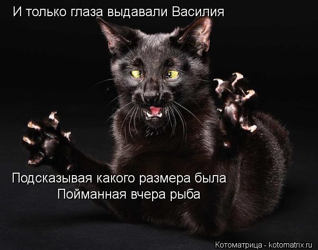 Котоматрица: И только глаза выдавали Василия  Подсказывая какого размера была  Пойманная вчера рыба
