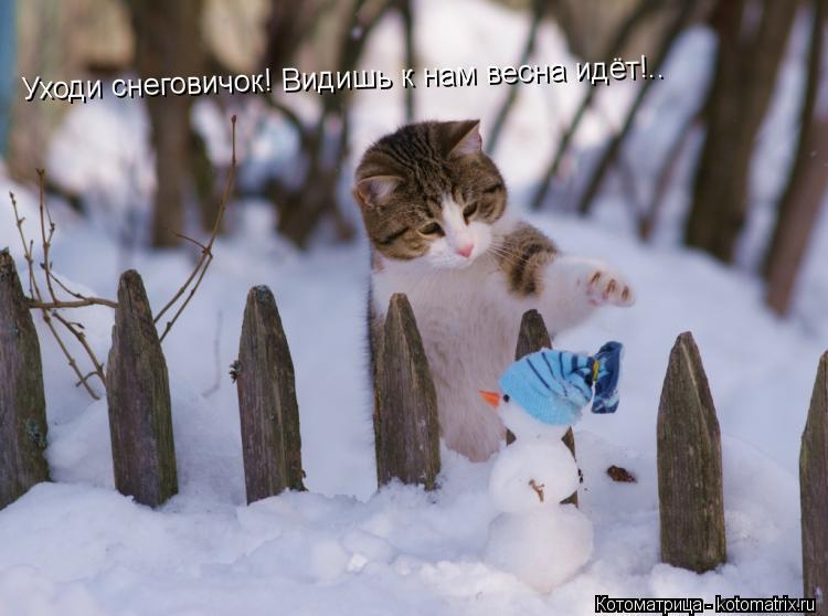 Котоматрица: Уходи снеговичок! Видишь к нам весна идёт!..