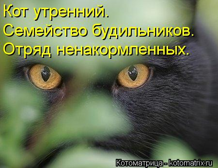 Котоматрица: Кот утренний. Семейство будильников. Отряд ненакормленных.