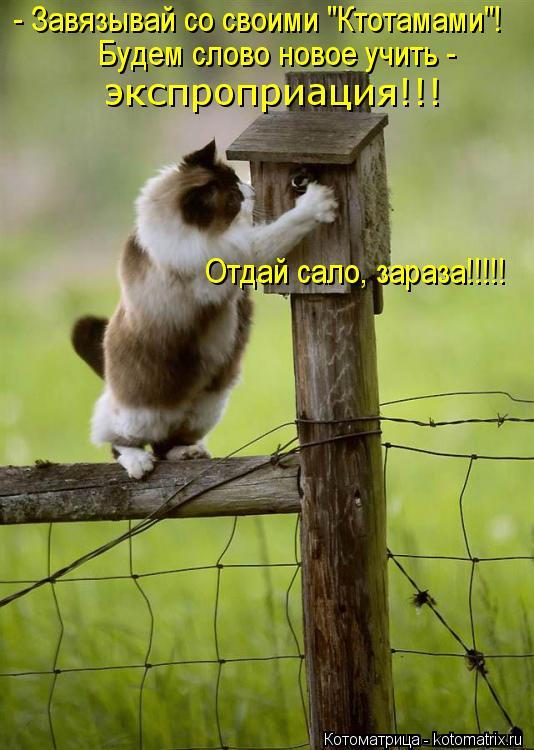 """Котоматрица: - Завязывай со своими """"Ктотамами""""! Будем слово новое учить -  экспроприация!!! Отдай сало, зараза!!!!!"""