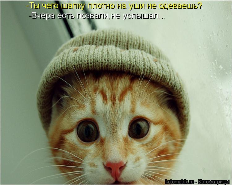 Котоматрица: -Ты чего шапку плотно на уши не одеваешь? -Вчера есть позвали,не услышал...