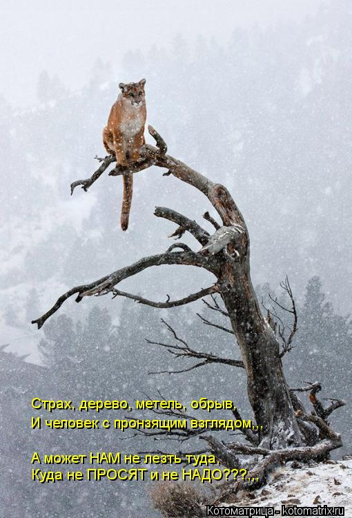 Котоматрица: Страх, дерево, метель, обрыв, И человек с пронзящим взглядом,,, А может НАМ не лезть туда, Куда не ПРОСЯТ и не НАДО???,,,