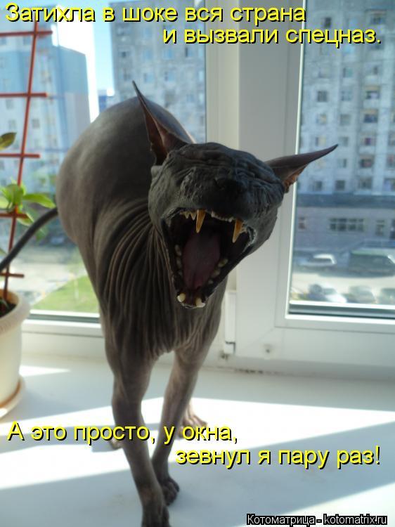 Котоматрица: Затихла в шоке вся страна  и вызвали спецназ.  А это просто, у окна, зевнул я пару раз!