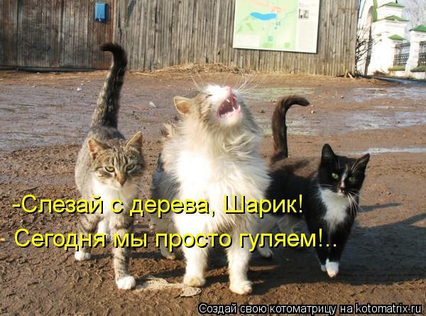 Котоматрица: -Слезай с дерева, Шарик! Сегодня мы просто гуляем!..