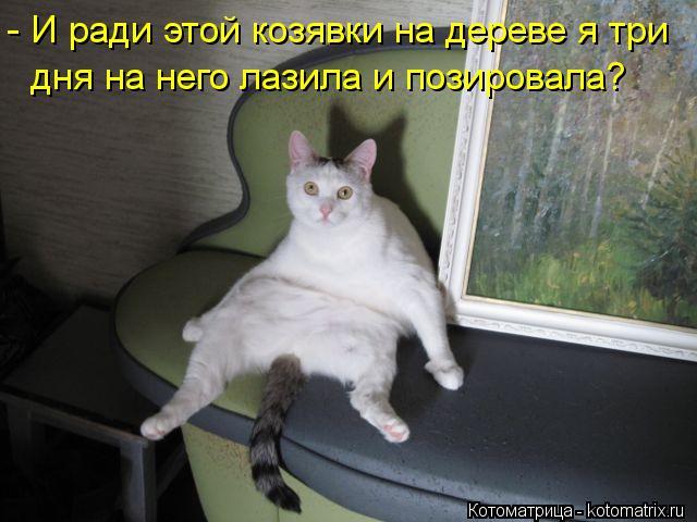 Котоматрица: - И ради этой козявки на дереве я три дня на него лазила и позировала?