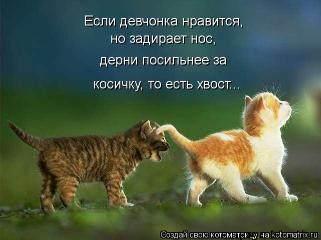 Котоматрица: Если девчонка нравится, но задирает нос, дерни посильнее за косичку, то есть хвост...