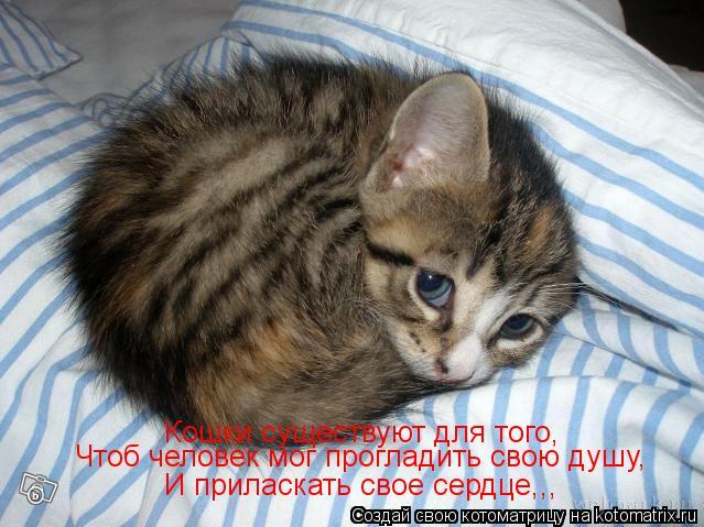Котоматрица: Кошки существуют для того, Чтоб человек мог прогладить свою душу, И приласкать свое сердце,,,