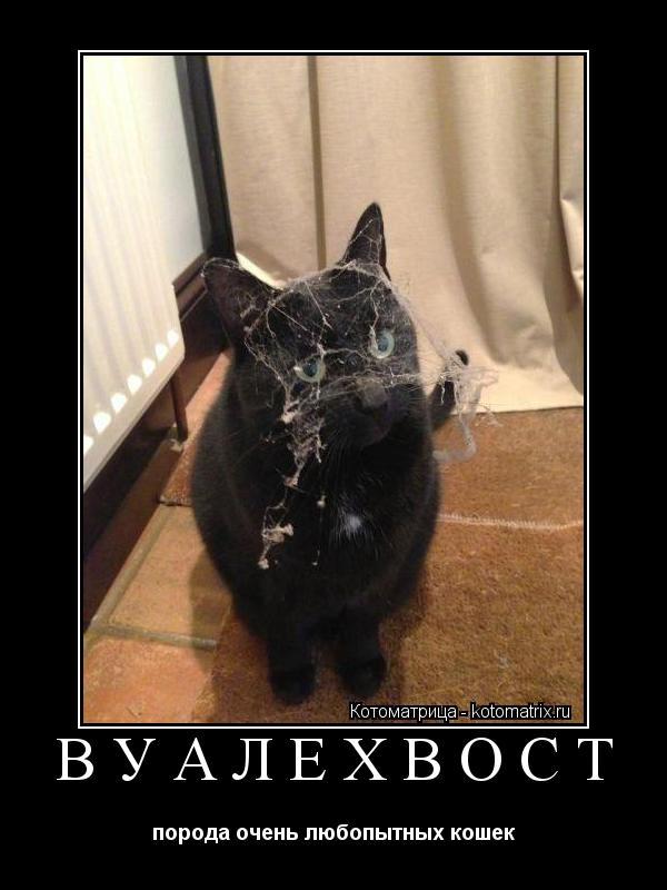 Котоматрица: ВУАЛЕХВОСТ порода очень любопытных кошек