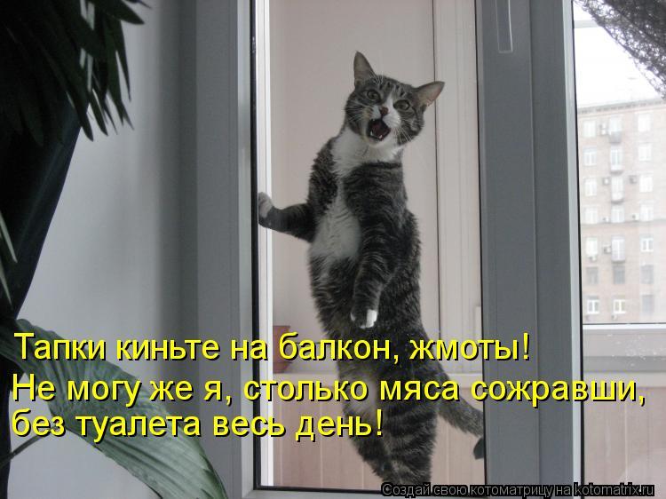 Котоматрица: Тапки киньте на балкон, жмоты! Не могу же я, столько мяса сожравши, без туалета весь день!