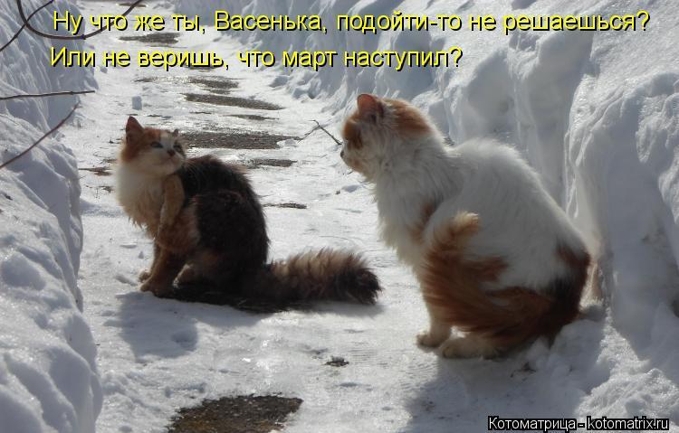 Котоматрица: Ну что же ты, Васенька, подойти-то не решаешься? Или не веришь, что март наступил?