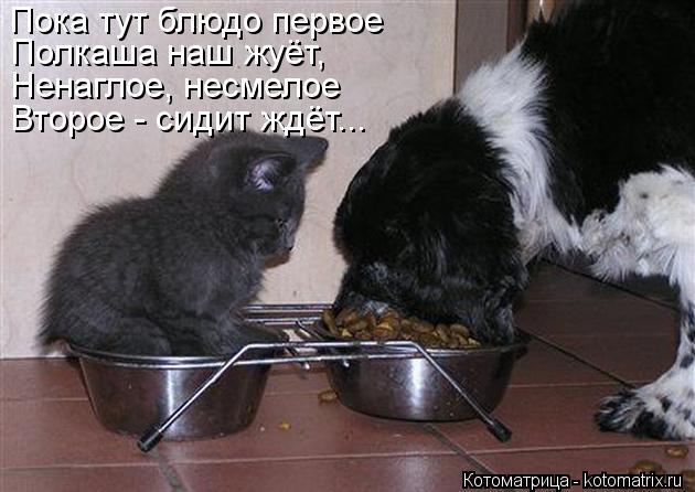 Котоматрица: Пока тут блюдо первое Полкаша наш жуёт, Ненаглое, несмелое Второе - сидит ждёт...