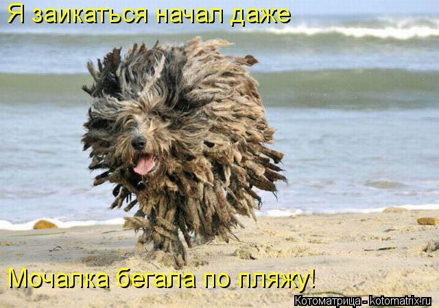 Котоматрица: Я заикаться начал даже  Мочалка бегала по пляжу!