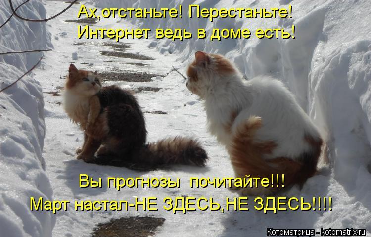 Котоматрица: Ах,отстаньте! Перестаньте! Интернет ведь в доме есть! Вы прогнозы  почитайте!!! Март настал-НЕ ЗДЕСЬ,НЕ ЗДЕСЬ!!!!