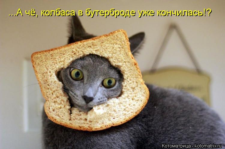 Котоматрица: ...А чё, колбаса в бутерброде уже кончилась!?