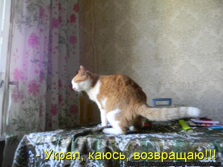 Котоматрица: - Украл, каюсь, возвращаю!!!