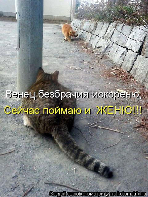 Котоматрица: Венец безбрачия искореню, Сейчас поймаю и  ЖЕНЮ!!!