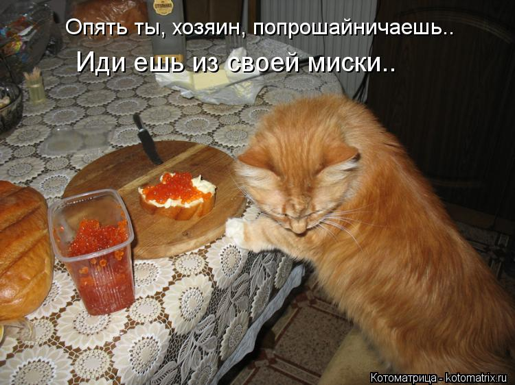 Котоматрица: Опять ты, хозяин, попрошайничаешь.. Иди ешь из своей миски..