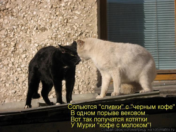 """Котоматрица: Сольются """"сливки"""" с """"черным кофе"""" В одном порыве вековом.. Вот так получатся котятки У Мурки """"кофе с молоком""""!"""