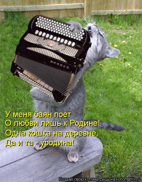 Котоматрица: У меня баян поет О любви лишь к Родине! Одна кошка на деревне, Да и та - уродина!
