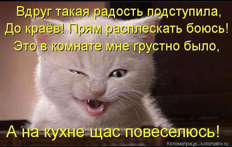 Котоматрица: Вдруг такая радость подступила, До краёв! Прям расплескать боюсь! Это в комнате мне грустно было, А на кухне щас повеселюсь!