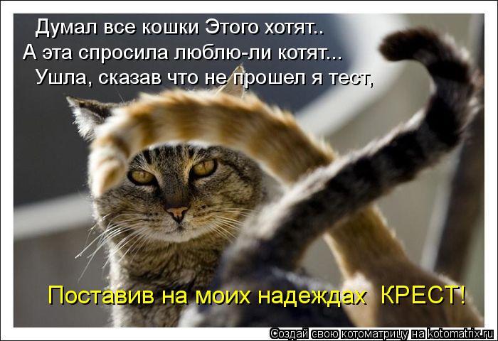 Котоматрица: Думал все кошки Этого хотят.. А эта спросила люблю-ли котят... Ушла, сказав что не прошел я тест, Поставив на моих надеждах  КРЕСТ!
