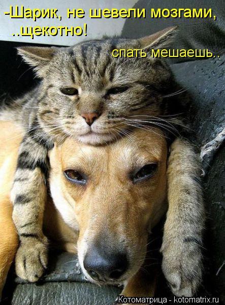 Котоматрица: -Шарик, не шевели мозгами, ..щекотно! спать мешаешь..