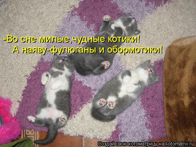 Котоматрица: -Во сне милые,чудные котики! А наяву-фулюганы и обормотики!