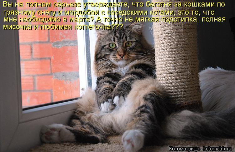 Котоматрица: Вы на полном серьезе утверждаете, что беготня за кошками по  грязному снегу и мордобой с соседскими котами, это то, что  мне необходимо в мар