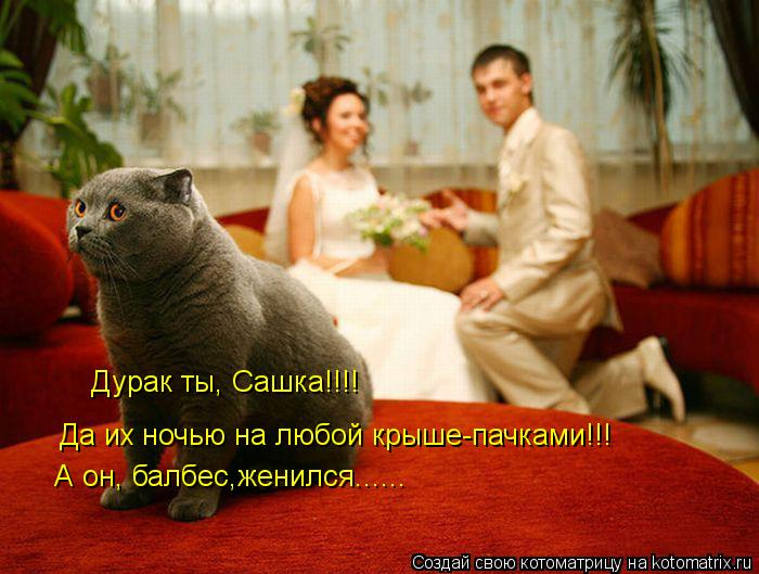 Котоматрица: Дурак ты, Сашка!!!! Да их ночью на любой крыше-пачками!!! А он, балбес,женился......