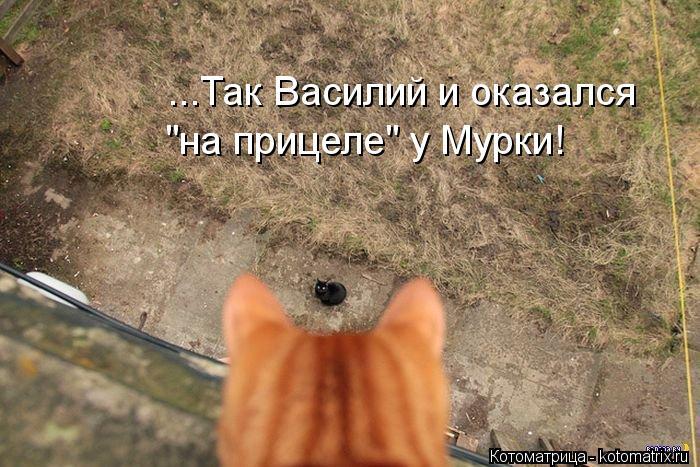 "Котоматрица: ...Так Василий и оказался  ""на прицеле"" у Мурки!"