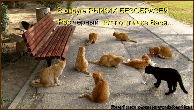 Котоматрица: В округе РЫЖИХ БЕЗОБРАЗЕЙ Рос чёрный кот по кличке Вася...