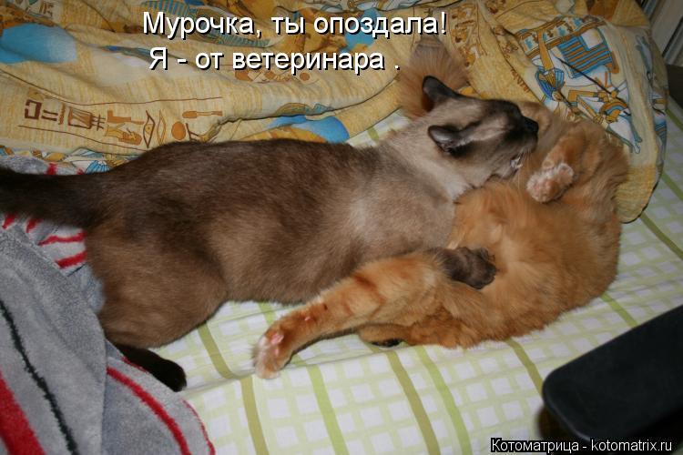 Котоматрица: Мурочка, ты опоздала! Я - от ветеринара .
