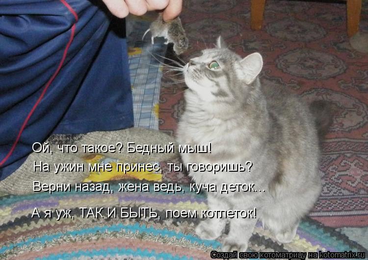 Котоматрица: Ой, что такое? Бедный мыш! На ужин мне принес, ты говоришь? Верни назад, жена ведь, куча деток... А я уж, ТАК И БЫТЬ, поем котлеток!