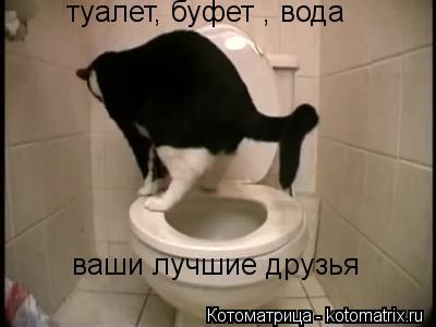 Котоматрица: туалет, буфет , вода - ваши лучшие друзья туалет, буфет , вода туалет, буфет , вода ваши лучшие друзья