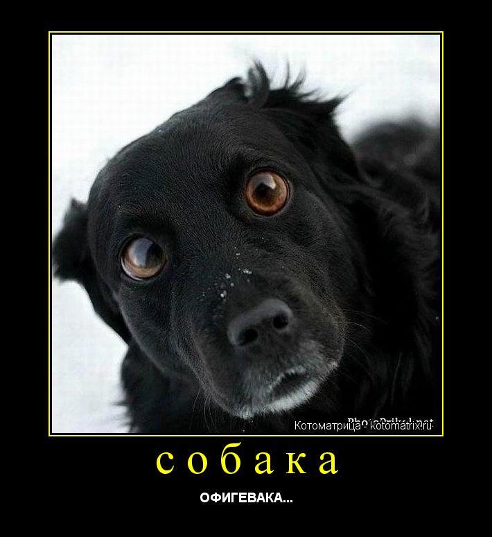 Котоматрица: собака ОФИГЕВАКА...