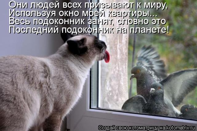 Котоматрица: Они людей всех призывают к миру, Используя окно моей квартиры... Весь подоконник занят, словно это Последний подоконник на планете!